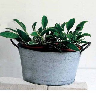 NORMANDIE OVAL POT M