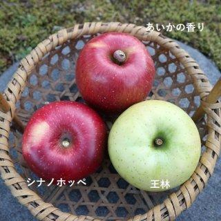 11月のりんごセット