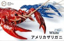 24ex-2 アメリカザリガニ(ホワイト)【スポット生産】 自由研究 いきもの編