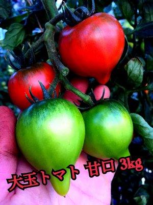 大玉デアルケトマト 3kg S.M.L混 1月頃のお届けご予約になります。