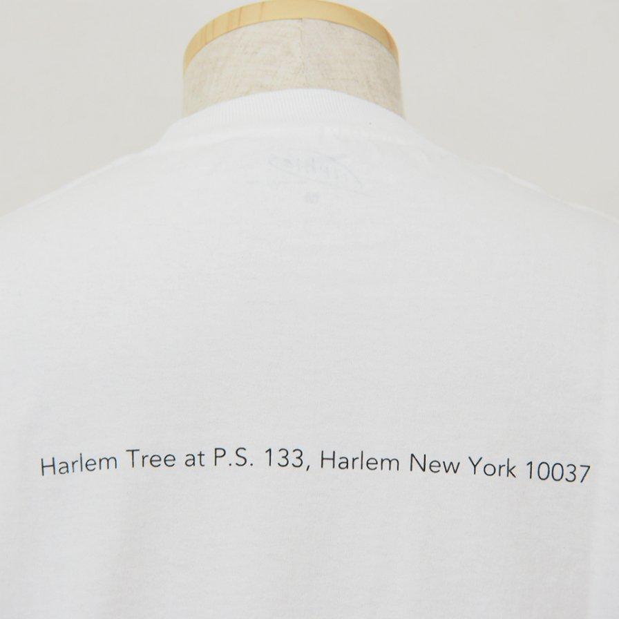 FilPhies - Harlem Tree at P.S. 133,  Harlem New York 10037 - White
