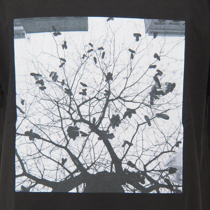 FilPhies - Harlem Tree at P.S. 133,  Harlem New York 10037 - Black