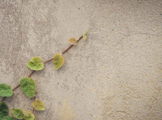 外壁 塗装 diy コンクリート