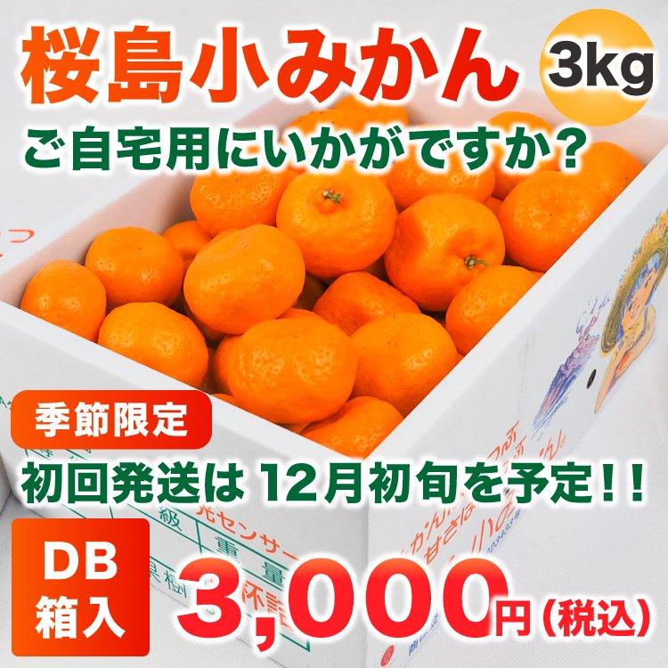 桜島小みかん 3Kg DB