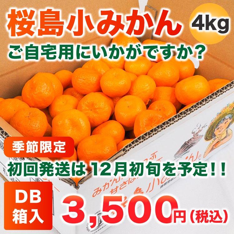 桜島小みかん 4Kg DB