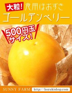 食用ほおずき「ゴールデンベリー」の種20粒(送料無料)