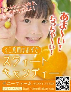 ミニ食用ほおずき「スウィートキャンディー」の種20粒(送料無料)
