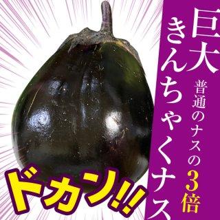 【巨大キンチャク型ナス!】香川県でしか手に入らない「三豊ナス」の種10粒(送料無料)