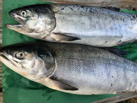 八戸産/メス鮭