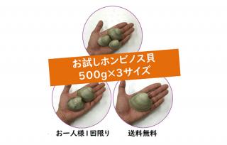【送料無料】お試しホンビノス貝500g×3サイズ合計1.5kg