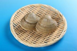 【送料無料】ホンビノス貝 5kg 大サイズ