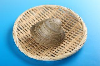 【送料無料】ホンビノス貝 5kg メガサイズ