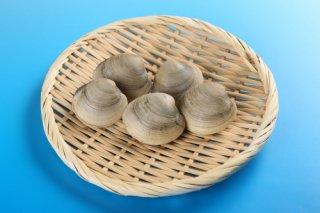 【送料無料】ホンビノス貝 2kg ミニサイズ