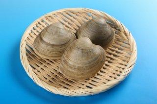 【送料無料】ホンビノス貝 2kg 大サイズ