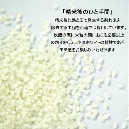 新米!コタキホワイト白米 2kg袋の3個セット(10月中旬より配送予定)