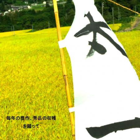 新米!コタキホワイト白米 2kg袋の4個セット(10月中旬より配送予定)