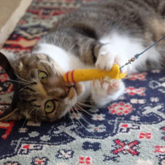 猫のおもちゃ|カラダキイロくん