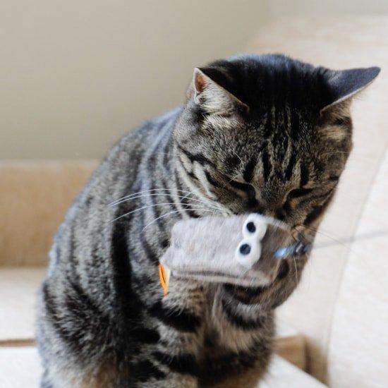 猫のおもちゃ|ギョロロ