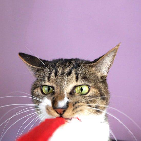 猫のおもちゃ|レッドペラちゃん