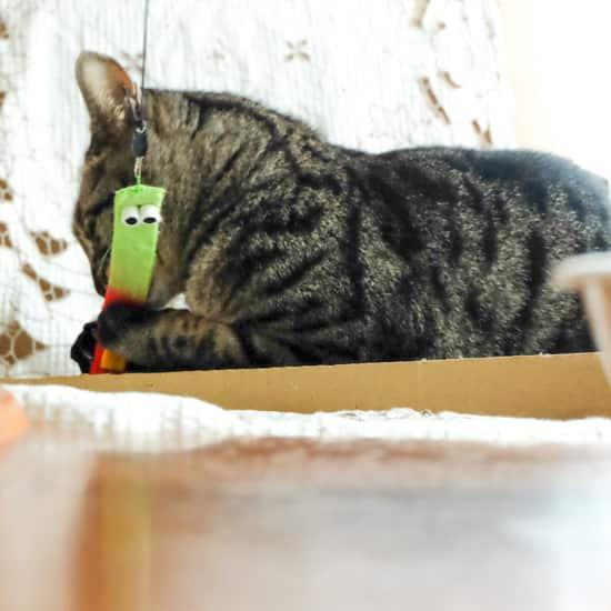 猫のおもちゃ|ペラララ