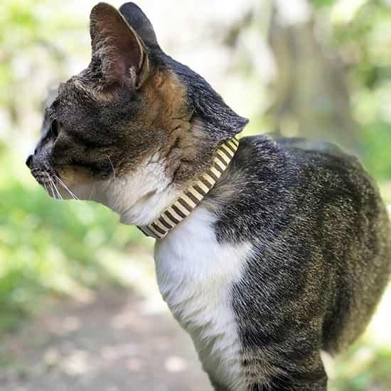 猫の首輪|チャコールグレーストライプ
