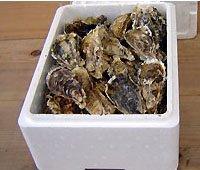 生食用 大粒殻付き牡蠣 (50個入) *他の商品と合わせてご注文の際は、商品により別途送料を頂く場合がございます。ご了承くださいませ。*