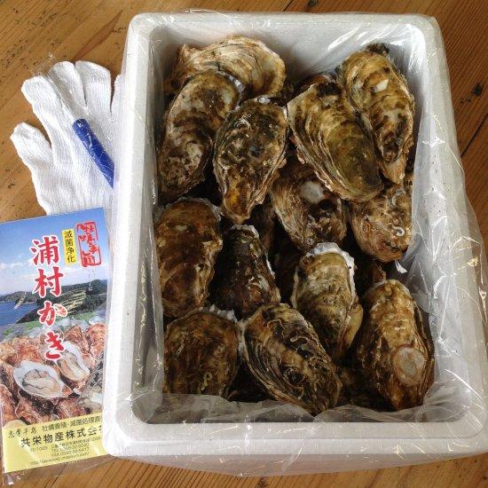 生食用 中粒殻付き牡蠣 (50個入) *他の商品をあわせてご注文の際、商品により別途送料を頂く場合がございますのでご了承ください。*
