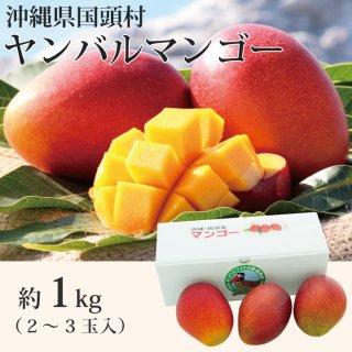 沖縄県国頭村ヤンバルマンゴー  1kg(2〜3玉)