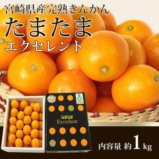 宮崎県産完熟きんかん「たまたま」エクセレント【送料無料】糖度18度以上!皮ごと食べられます