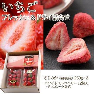 苺のフレッシュとドライ詰合せ【送料無料】