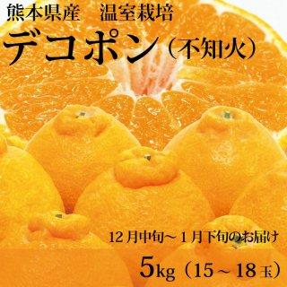 【12月1月のお届け】熊本県産温室デコポン5kg(15〜18玉)