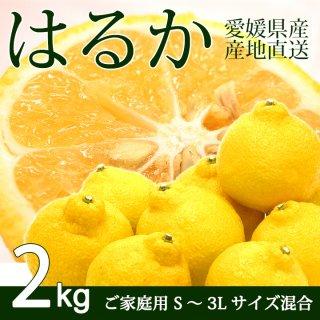 【ご家庭用】愛媛三幸園・はるか2kg