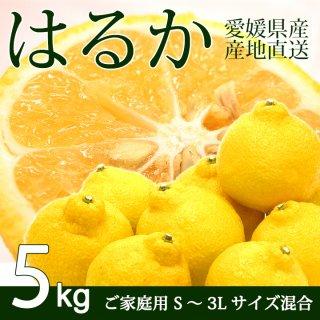 【ご家庭用】愛媛三幸園・はるか5kg