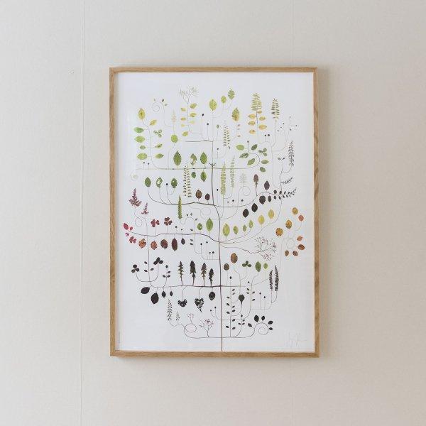 Poster Beech Tree 50×70cm