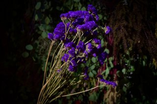 <img class='new_mark_img1' src='//img.shop-pro.jp/img/new/icons1.gif' style='border:none;display:inline;margin:0px;padding:0px;width:auto;' />dry flower statice purple