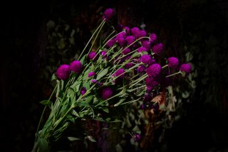 <img class='new_mark_img1' src='//img.shop-pro.jp/img/new/icons1.gif' style='border:none;display:inline;margin:0px;padding:0px;width:auto;' />dry flower globe amaranth (千日紅)