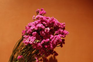 <img class='new_mark_img1' src='//img.shop-pro.jp/img/new/icons25.gif' style='border:none;display:inline;margin:0px;padding:0px;width:auto;' />dry flower pink Limonium (スターチス)