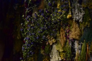 <img class='new_mark_img1' src='//img.shop-pro.jp/img/new/icons1.gif' style='border:none;display:inline;margin:0px;padding:0px;width:auto;' />dry flower peacock astor