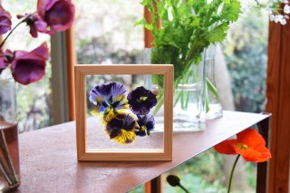 framed pressed flower mini 019 with box