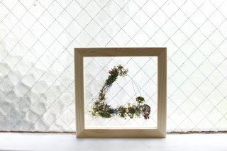 <img class='new_mark_img1' src='//img.shop-pro.jp/img/new/icons1.gif' style='border:none;display:inline;margin:0px;padding:0px;width:auto;' />framed pressed flower : 059