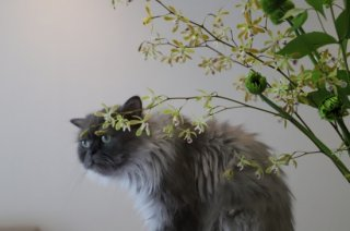 Summer flowers of the months for cats
