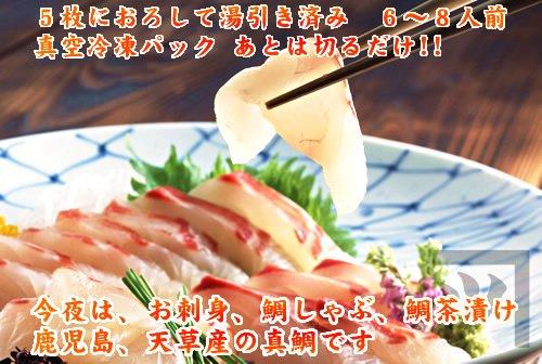 コロナ対策 緊急値下げ 真鯛(マダイ) 刺身用 一匹