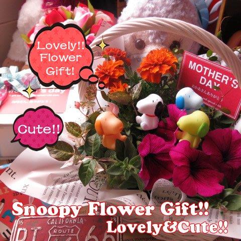 母の日 スヌーピー入り 鉢植え カラフルスヌーピーマスコット4個入り スヌーピーいっぱい ◆お花は季節のお花でおまかせ♪ ◆スヌーピーカラーはおまかせ…