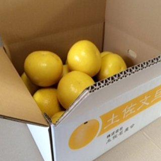 【ご家庭用】農薬をまいていない土佐文旦1箱(5kg)