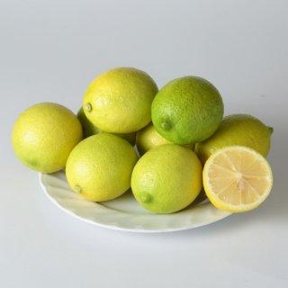 【良品】無農薬ハウス栽培レモン  (量り売り/kg)