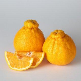 【全国送料込】 減農薬しらぬい(デコポン) 5kg