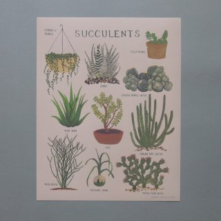 <img class='new_mark_img1' src='//img.shop-pro.jp/img/new/icons56.gif' style='border:none;display:inline;margin:0px;padding:0px;width:auto;' />succulents poster