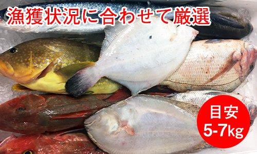 業務用鮮魚セット標準グレード/目安5-7kg