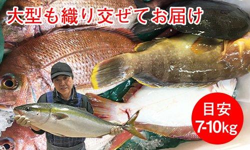 業務用鮮魚セットボリューム重視/目安7-10kg