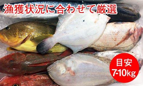 業務用鮮魚セット標準グレード/目安7-8kg